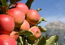 bespoten appel